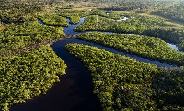 Vamos Salvar a Amazônia!